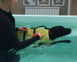 Doggy swimming classes and the benefits of aquatic therapy