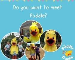 Meet Puddle the Duck